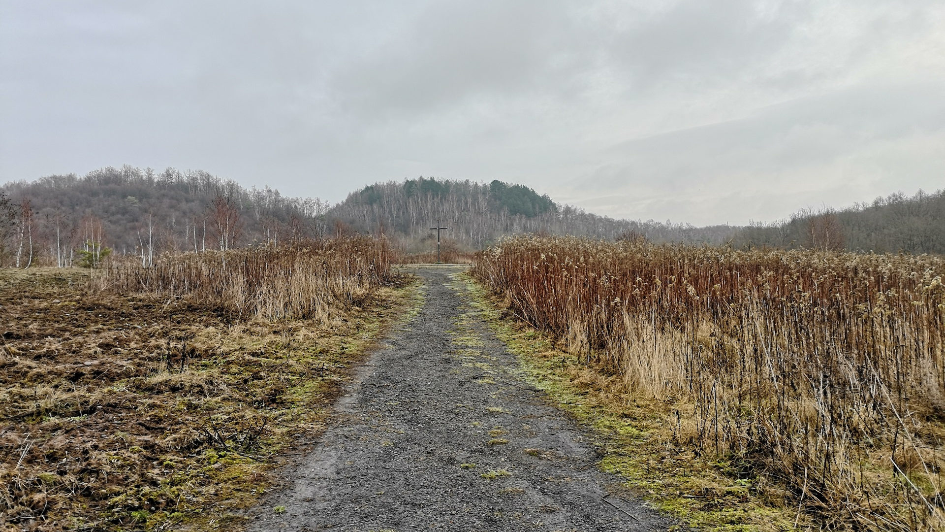 Strauch's Wanderlust