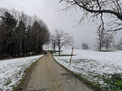 Rundwanderweg durch Wald und Reben – Etappe 02/04