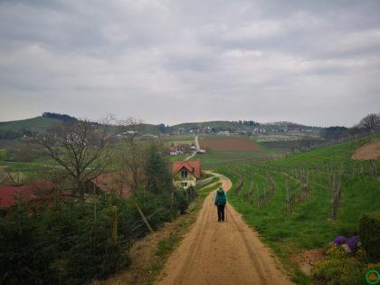 Rundwanderweg durch Wald und Reben – Etappe 04/04