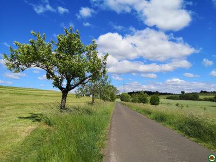 Panoramaweg Sankt Wendeler Land – Etappe 02/06