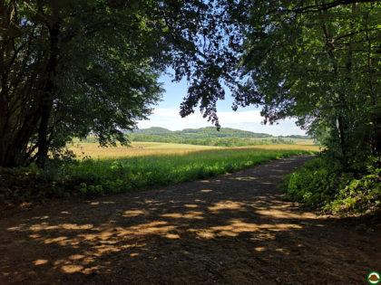 Panoramaweg Sankt Wendeler Land – Etappe 06/06